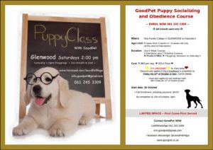 GoodPet Puppy Socializing & Obedience Promotion