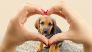 Heart shaped hands focus on puppy dog