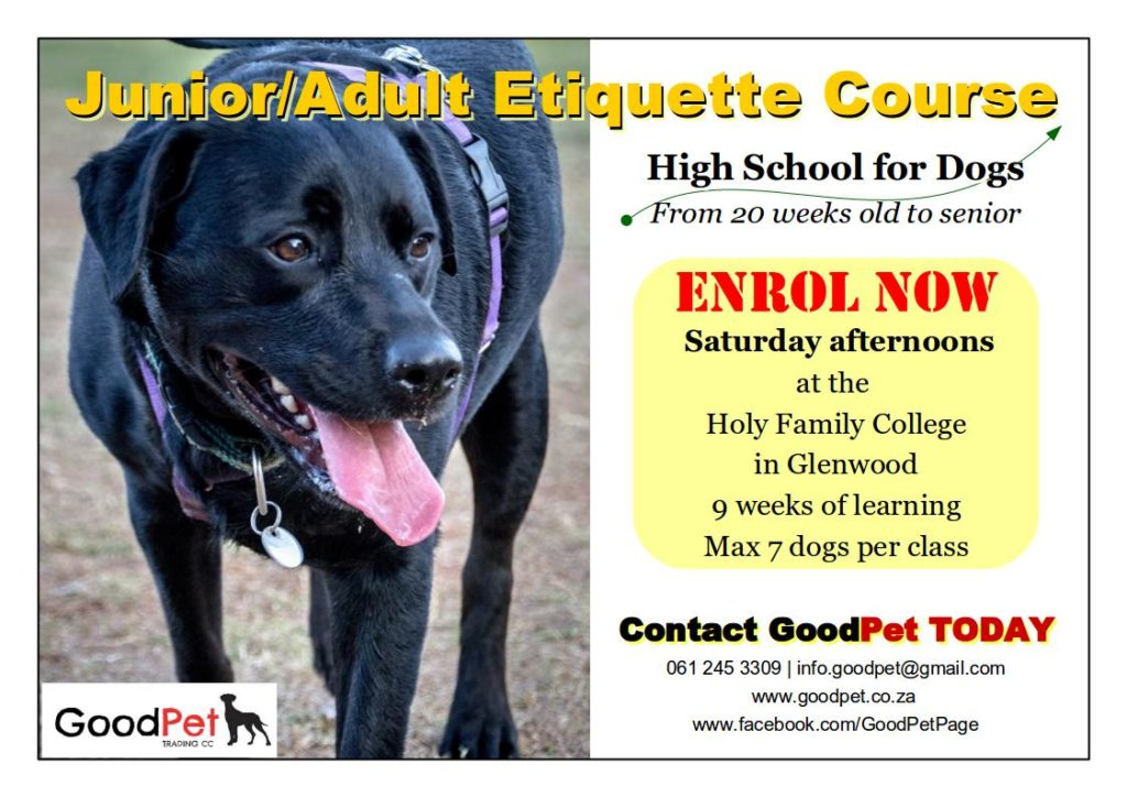 Dog training in Durban for young adult dogs