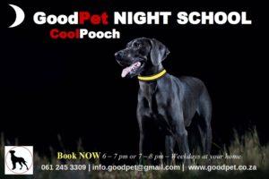 GoodPet Dog Training in Durban - Night School