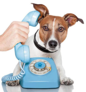 Call GoodPet now to book your pet consultation for either your dog, cat, or bird