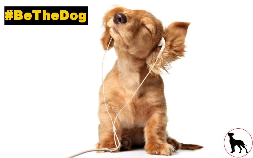 #BeTheDog in your neighbourhood